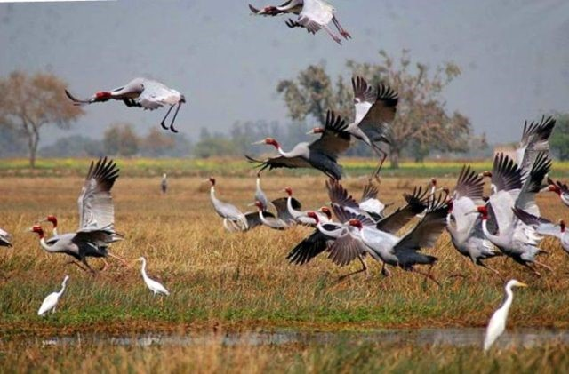 Birding For A Day (Siem Reap – Prek Toal Bird Sanctuary For A Day.)